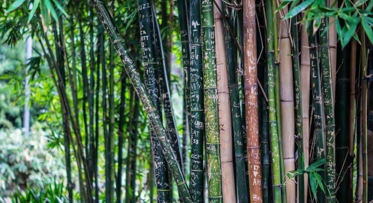 best-bamboo-charcoal-air-freshener